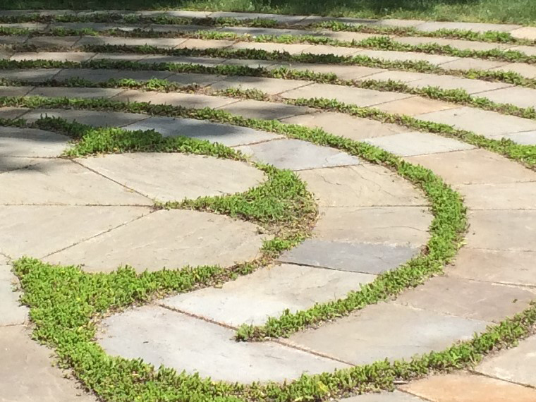 Transforming a shady lawn into a meditation labyrinth.